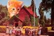 Книга Еще кошек, пожалуйста (СИ) автора Крайцер Наоми