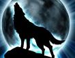 Книга Одинокий волк автора Оксана Головина