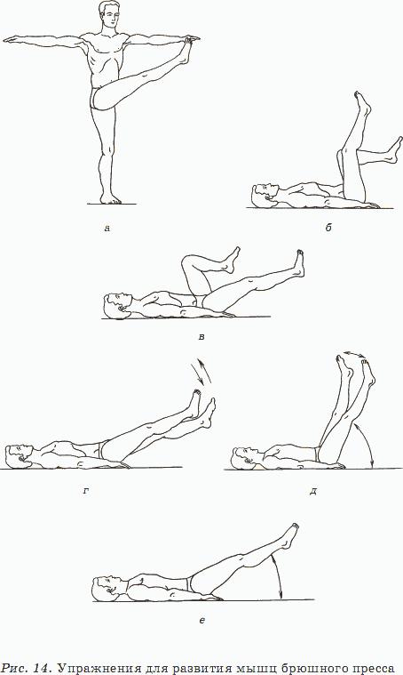 упражнения для брюшных мышц в картинках бюджетным вариантом укрытия
