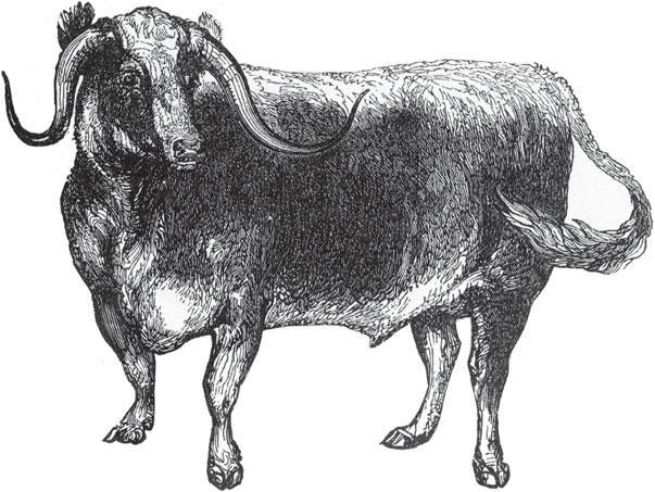 картинки предки коровы живые фотографии