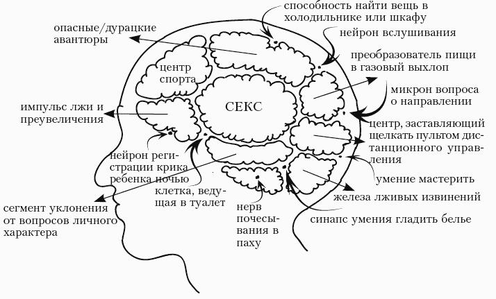 Днем февраля, картинка мозг женщины прикольный