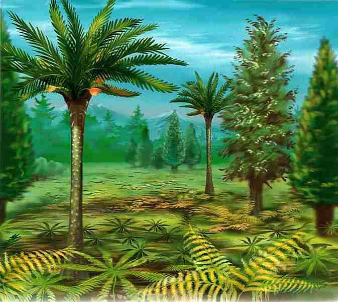 Лесные и полевые растения для сада фото неудивителен интерес