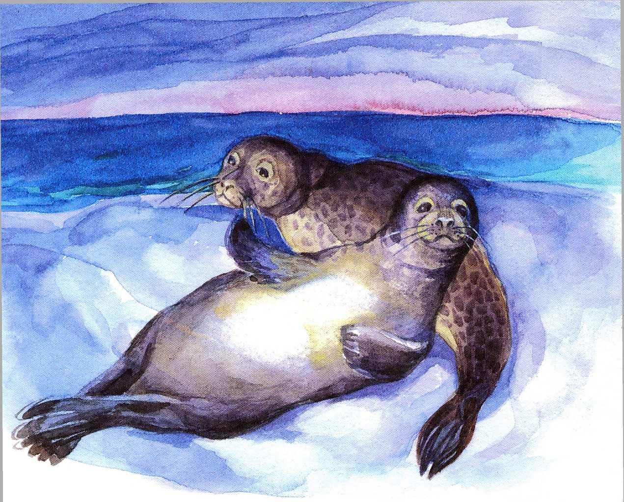 летающих подпиши рисунки тюлень на льдине узнать